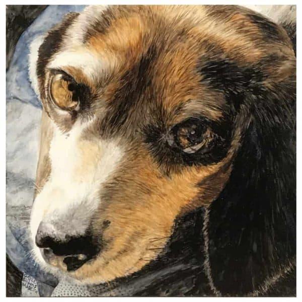 Petunia the Beagle